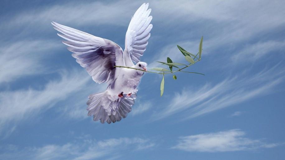 Peace dove.jpg