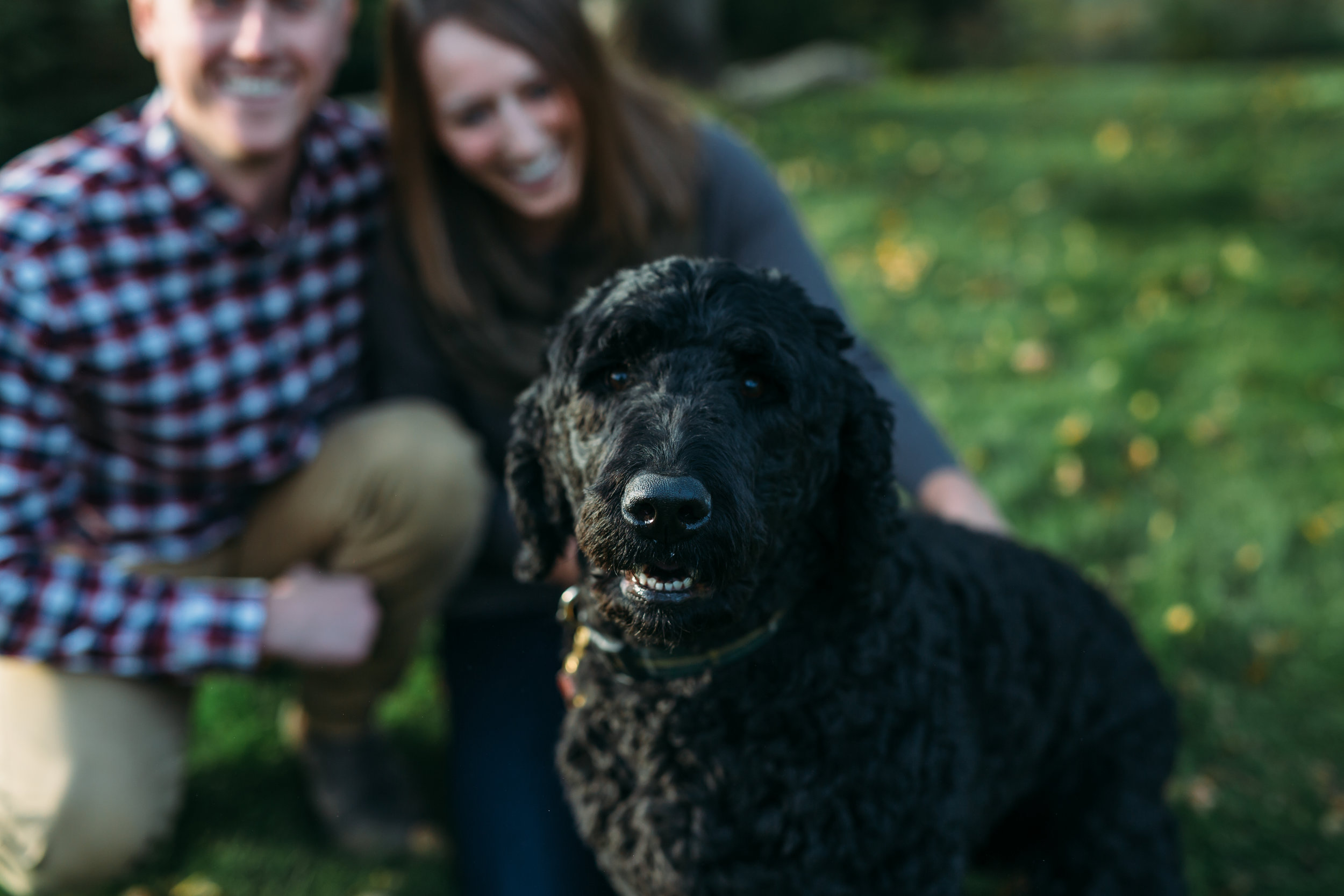 Newfoundland pet friendly engagement session
