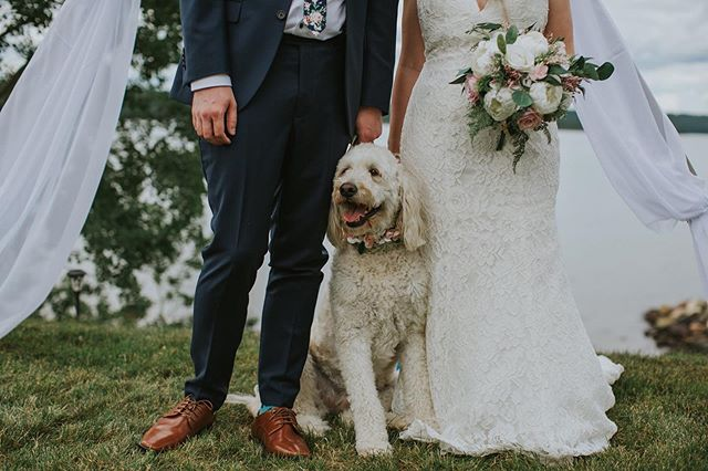 All about the fur babies at weddings 💕🙌 • • • #clarenville #yyt #yytweddings #newfoundlandphotography #newfoundlandwedding