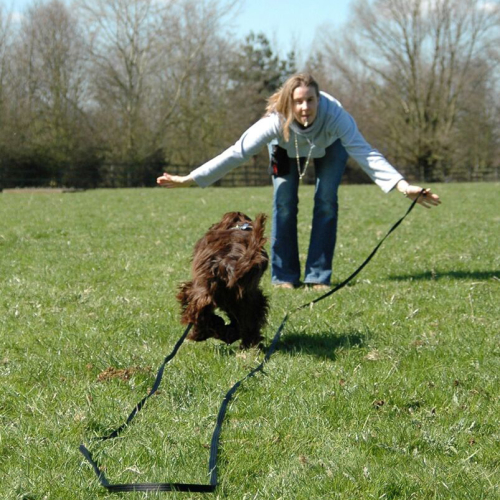 guia longa para cães