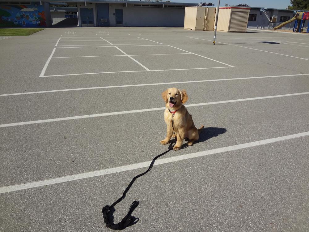 guia de treinamento para cães