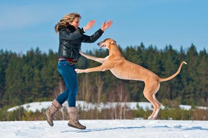 cachorro que pula em pessoas