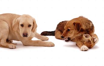 cães possessivos