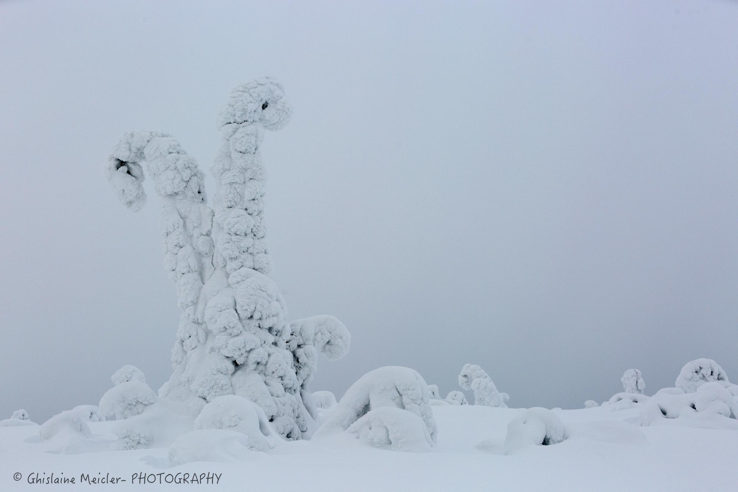 Ghislaine Meicler - Finlande-356.jpg
