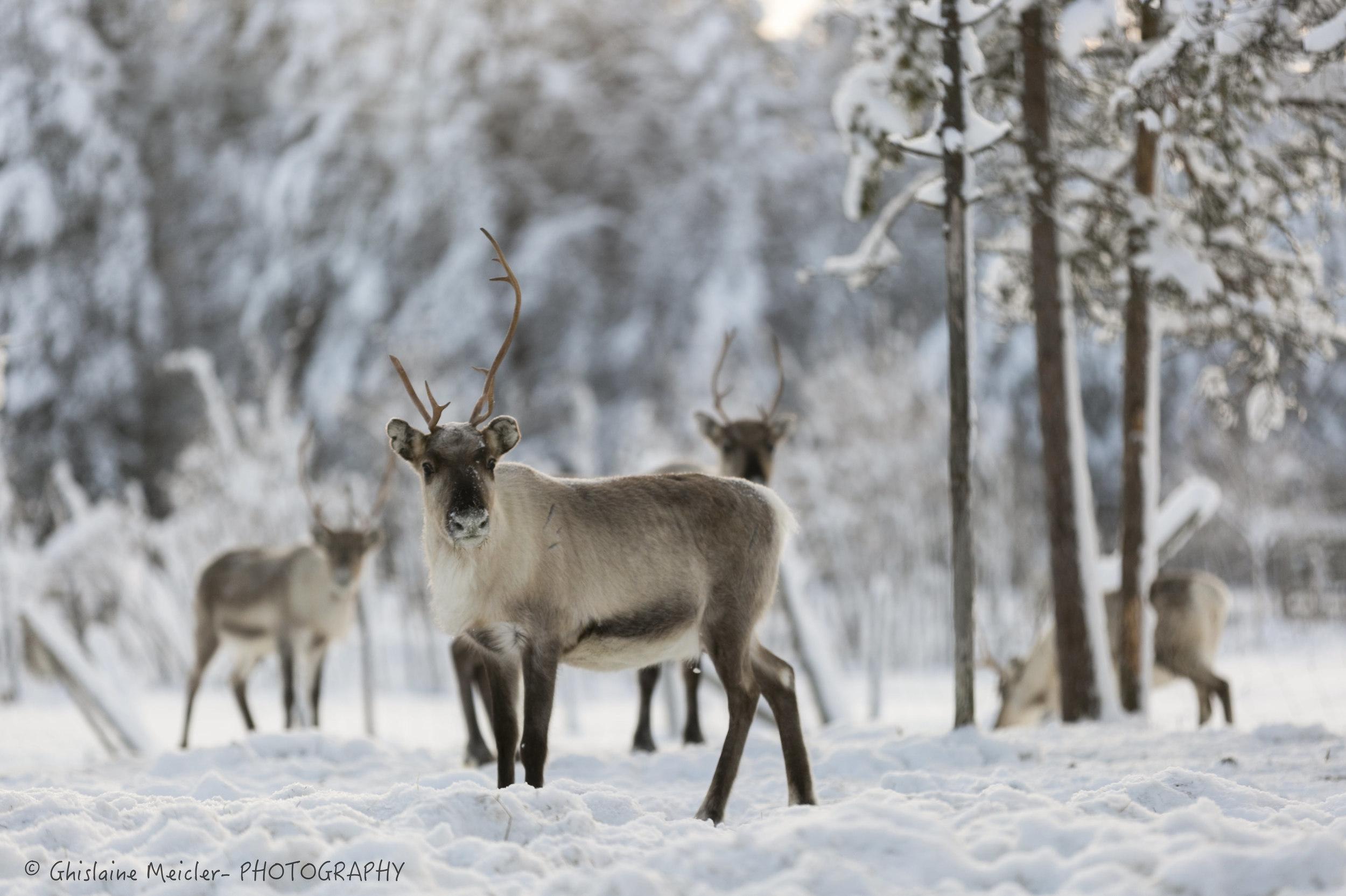 Finlande-101-4.jpg
