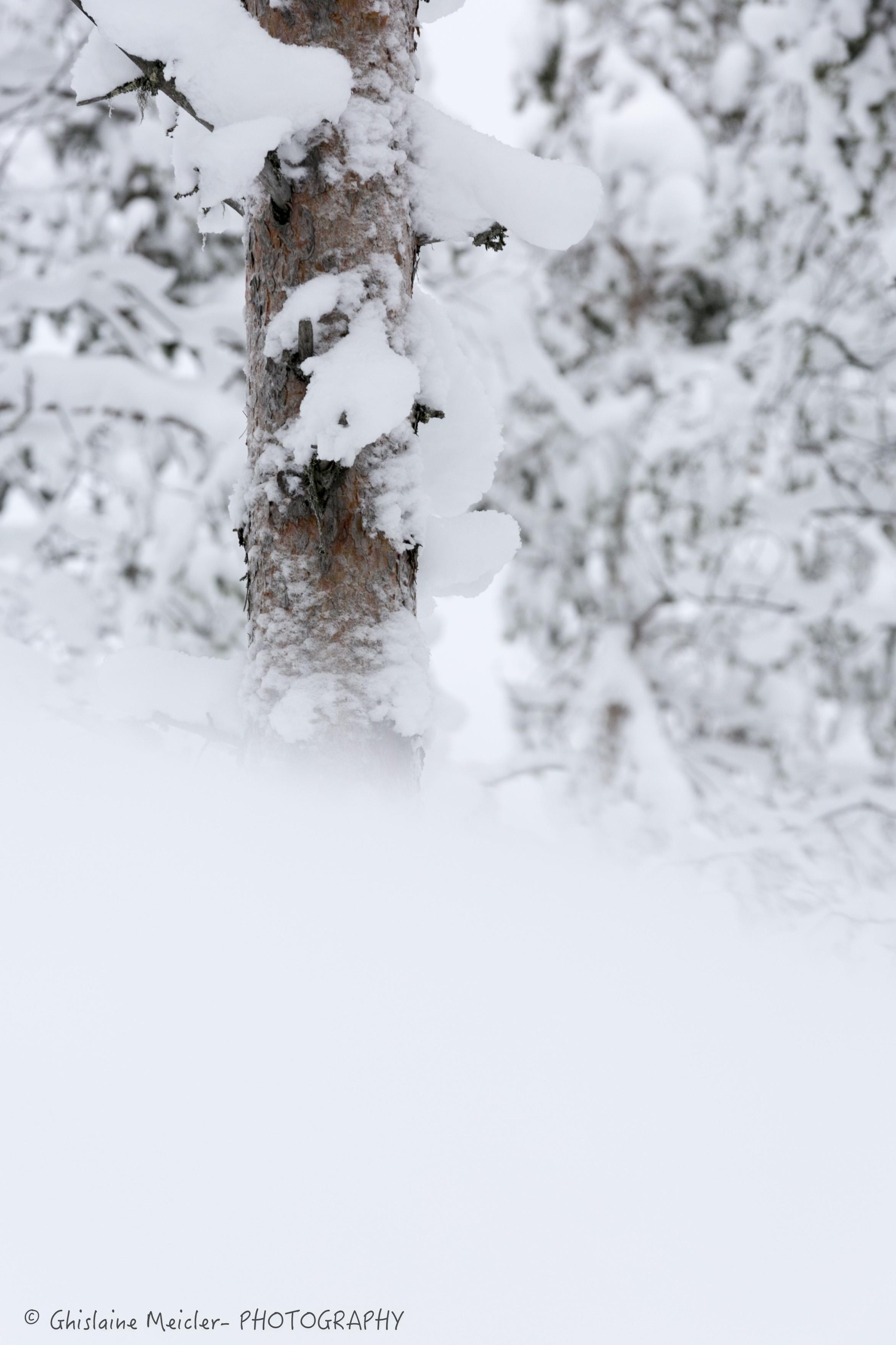 Ghislaine Meicler - Finlande-6398.jpg