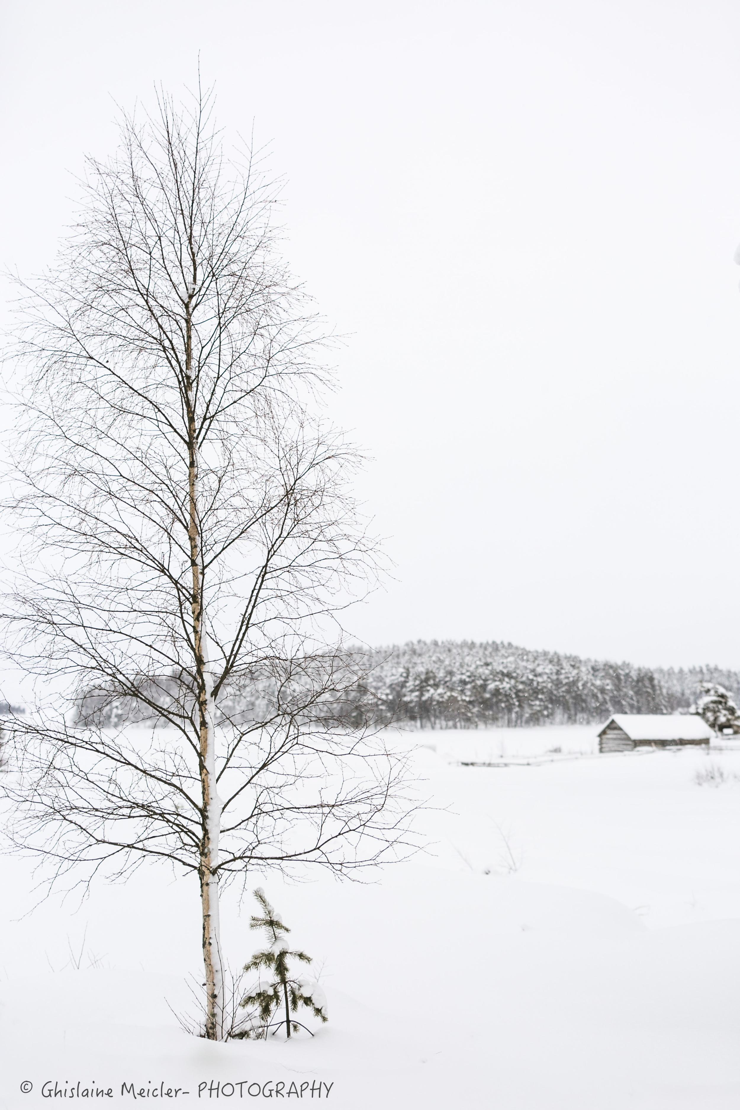 Finlande-526.jpg