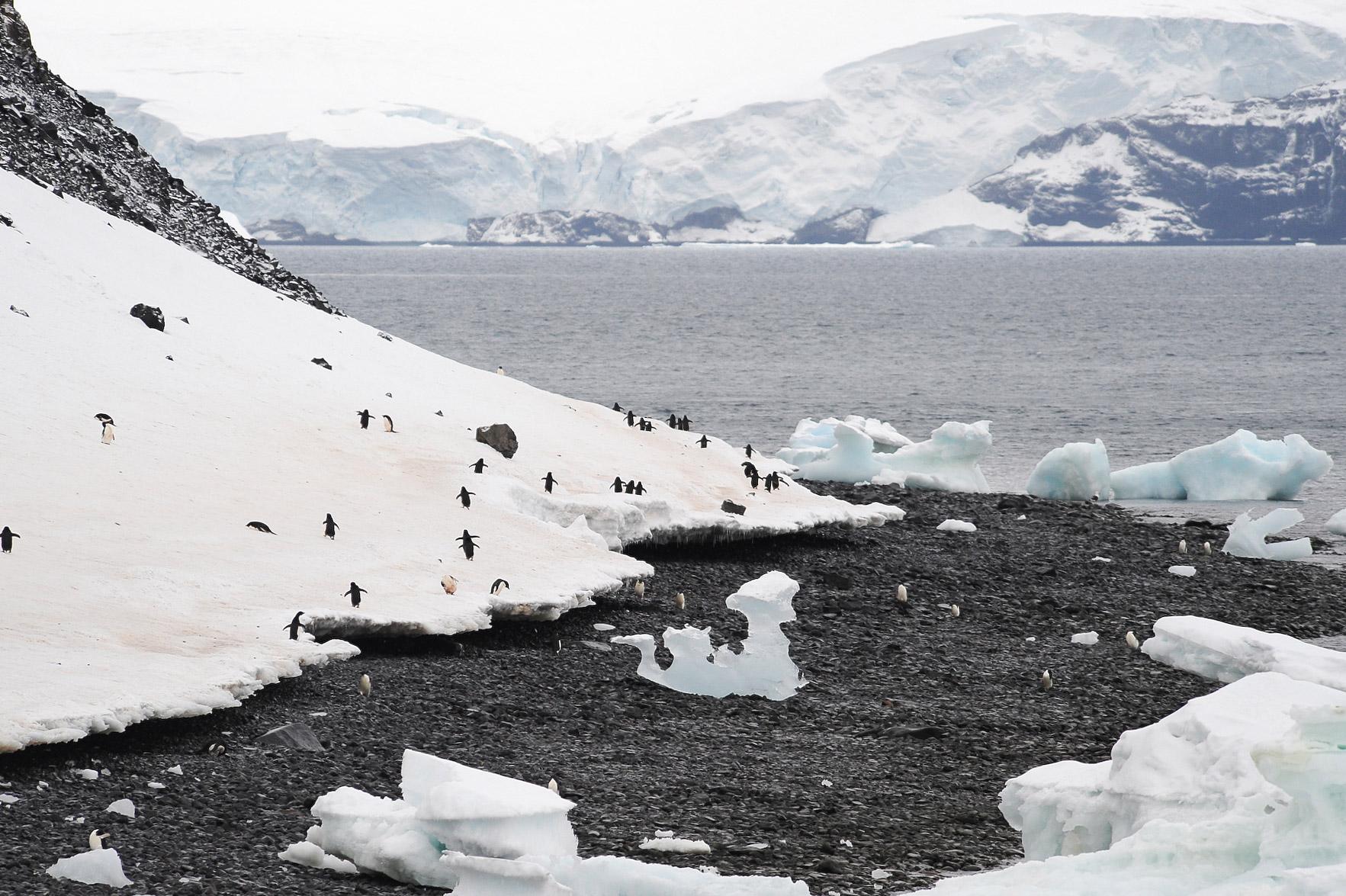 Antarctique- J5: Mer de Wedell- ile Paulet
