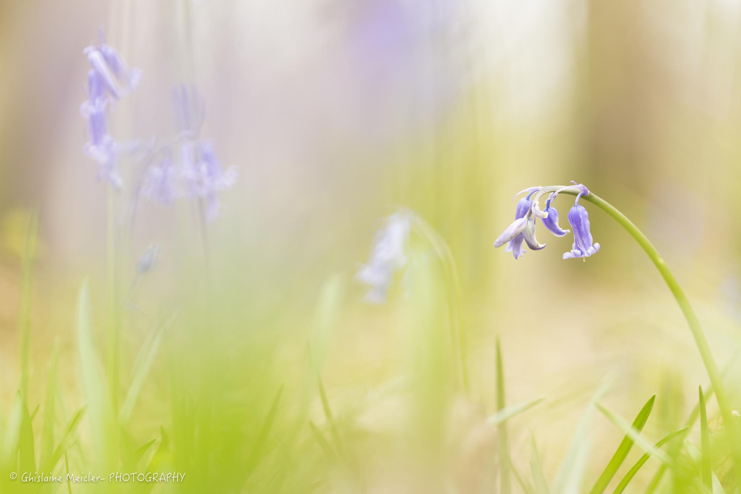 Fleur-2471.jpg