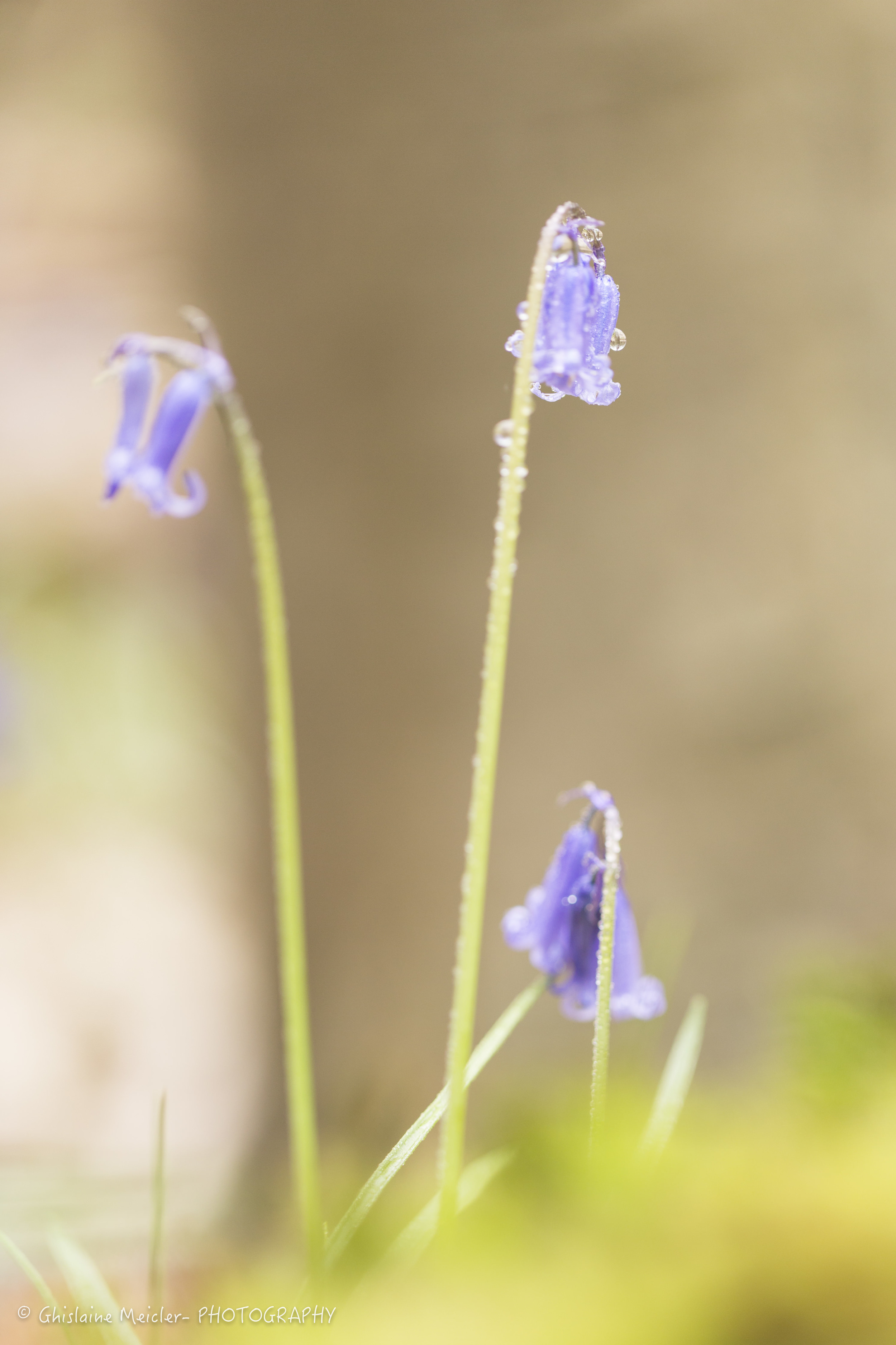 Fleur-2486.jpg