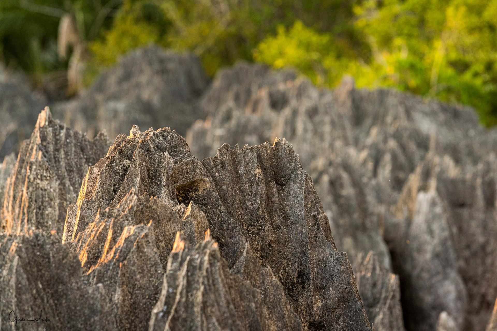 Madagascar--1171.jpg