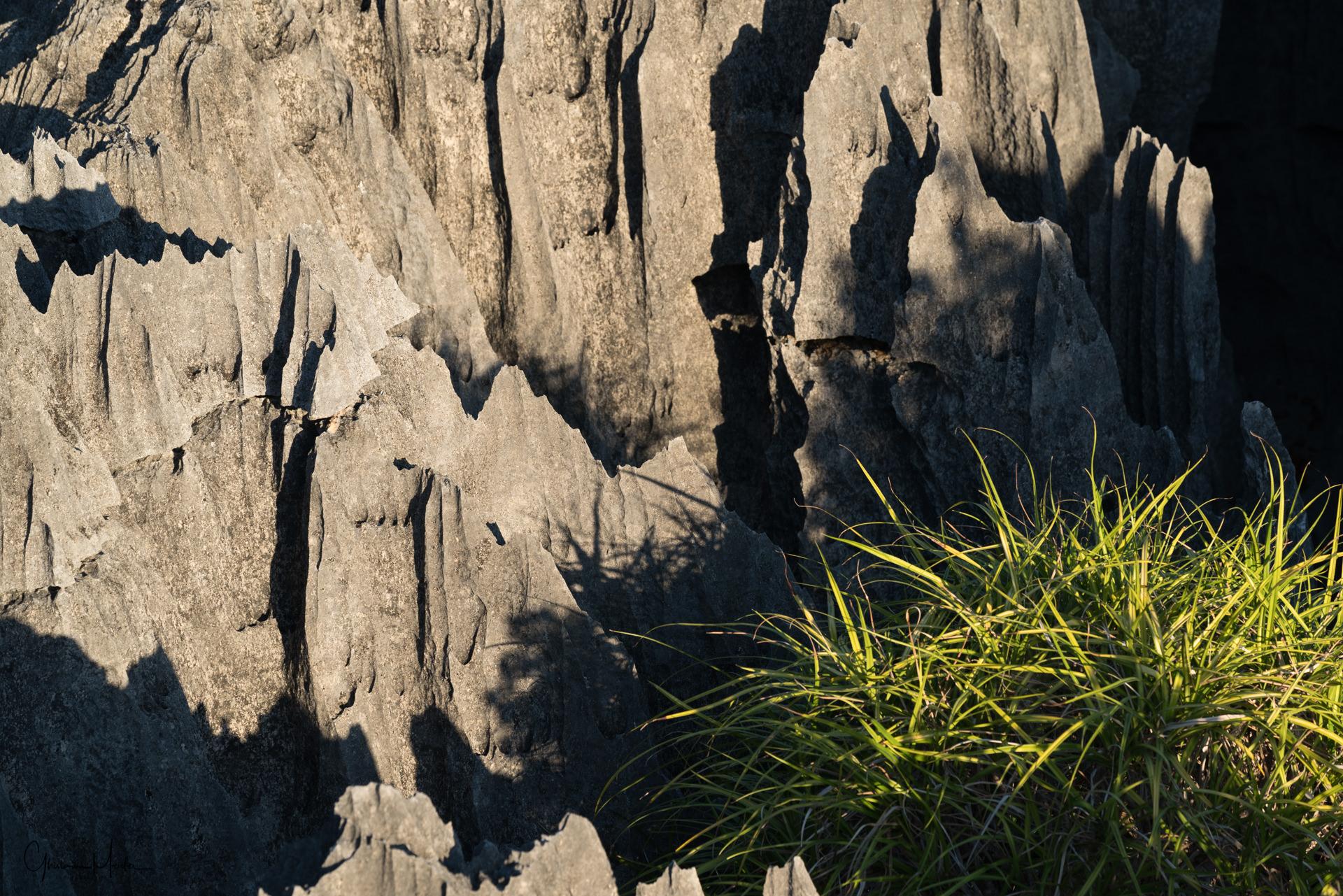 Madagascar--1162.jpg