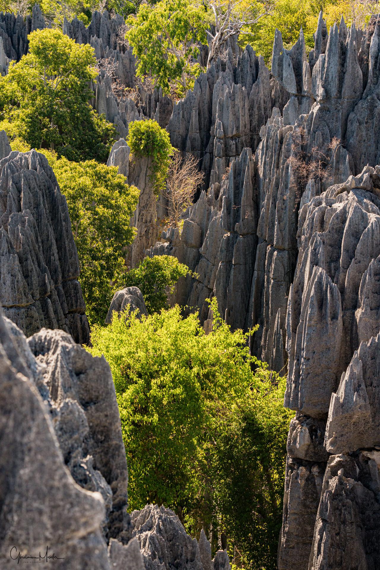Madagascar--1461.jpg