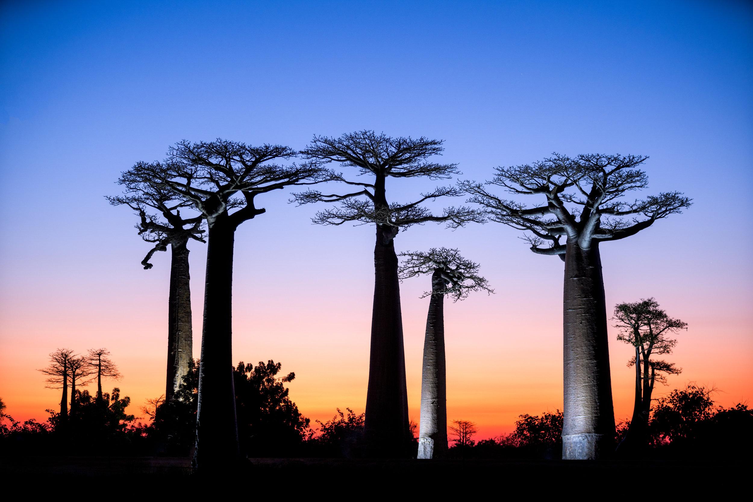 Madagascar--1672-Modifier.jpg