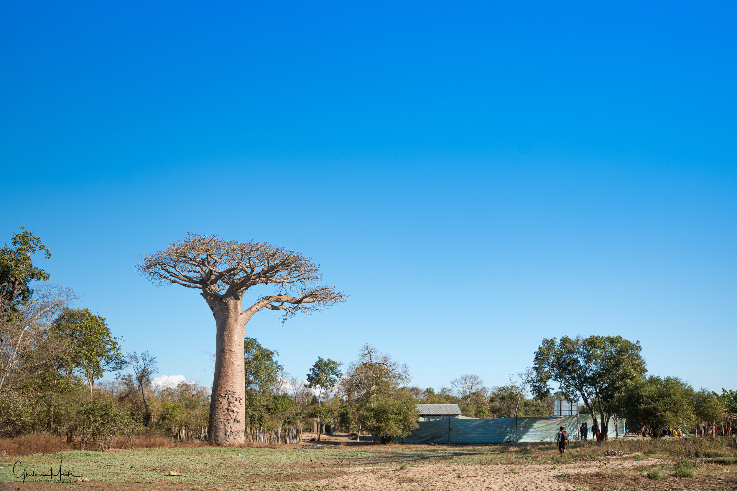 Madagascar--1551.jpg