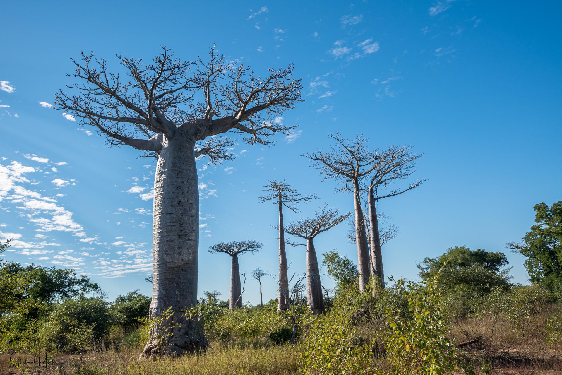 Madagascar--3882.jpg