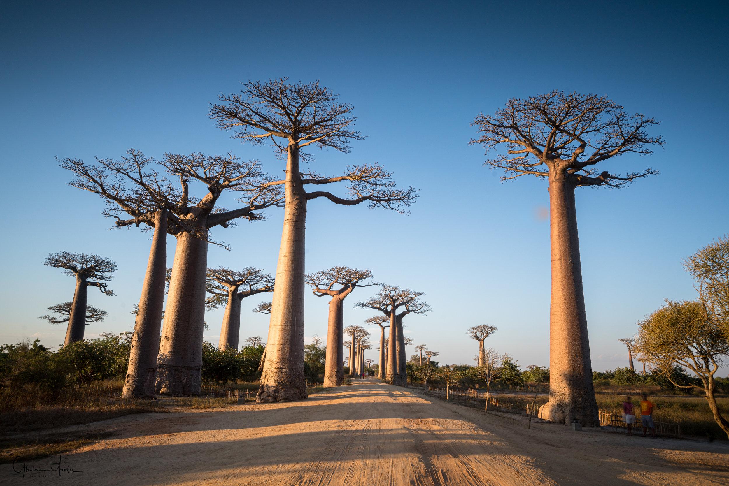 Madagascar--1584.jpg