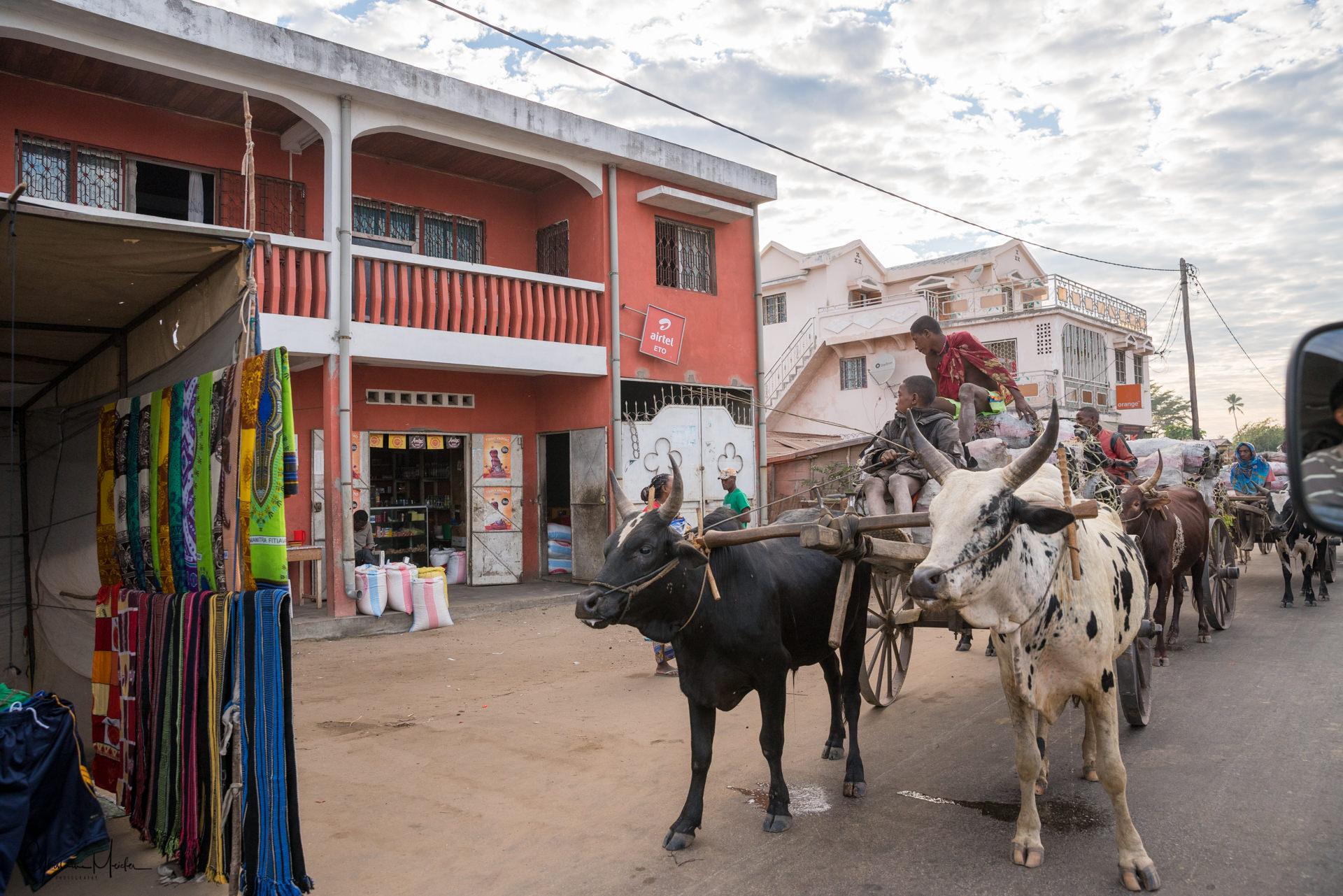 Madagascar--4154.jpg