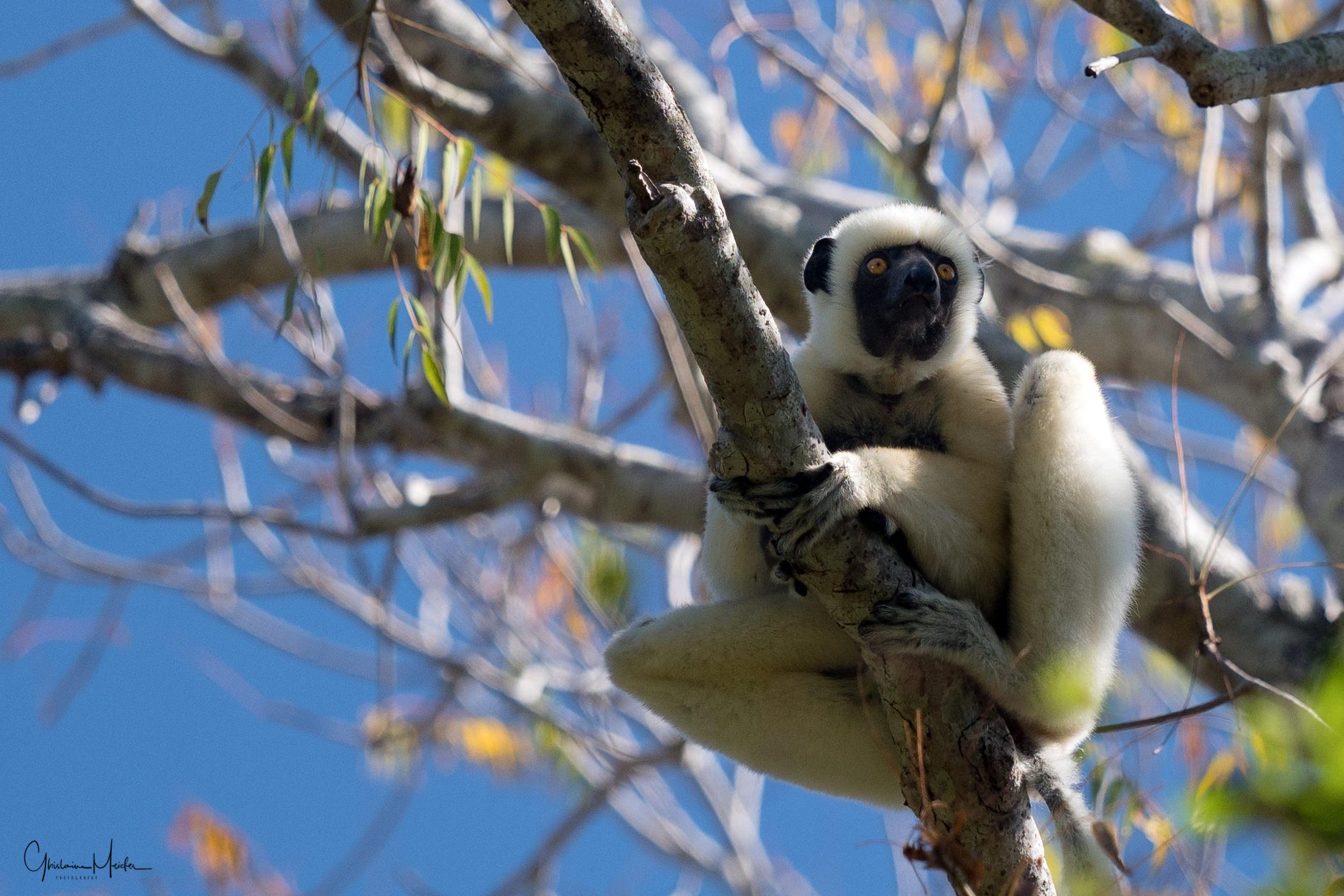 Madagascar--1387-Modifier.jpg