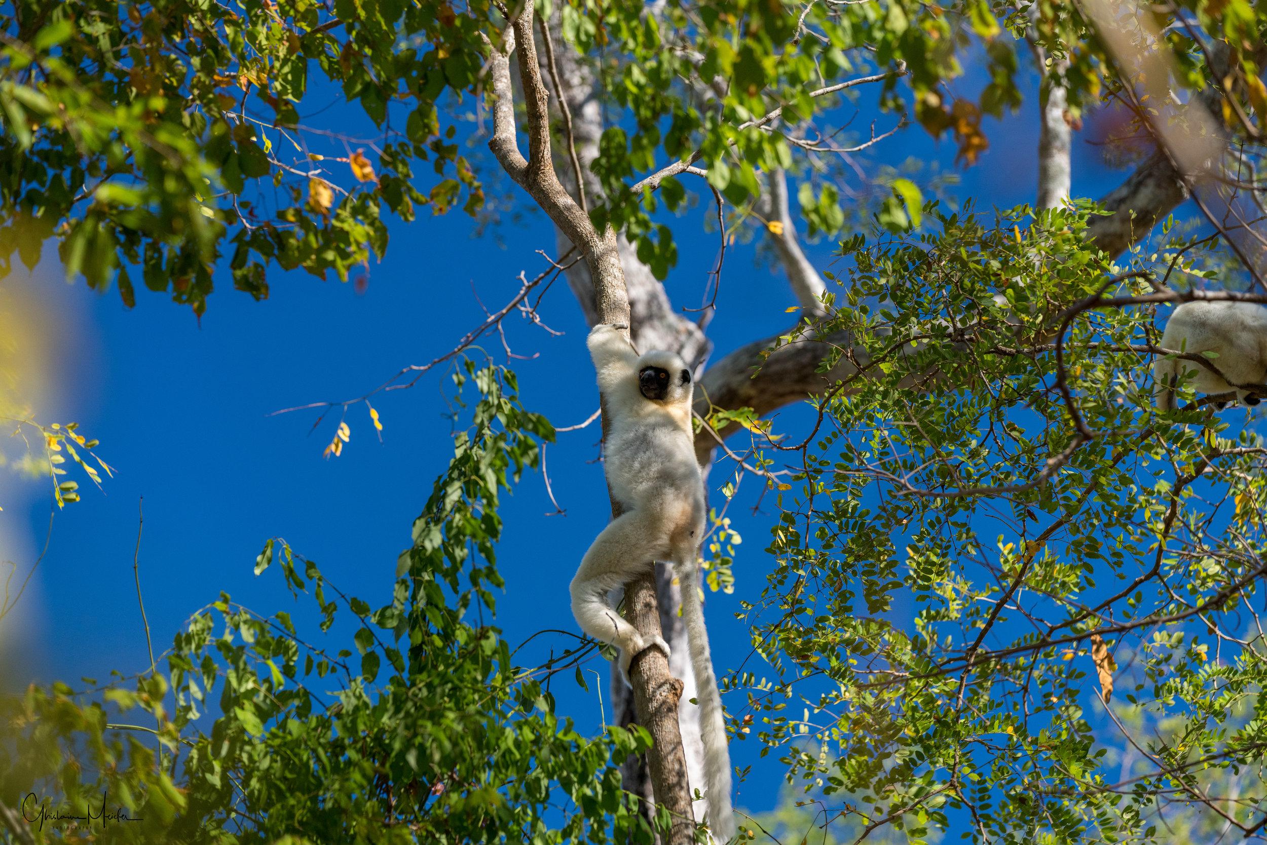 Madagascar--1252.jpg