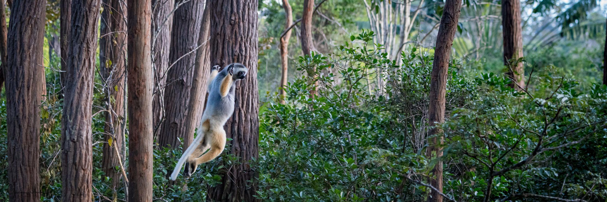 Madagascar--5764.jpg