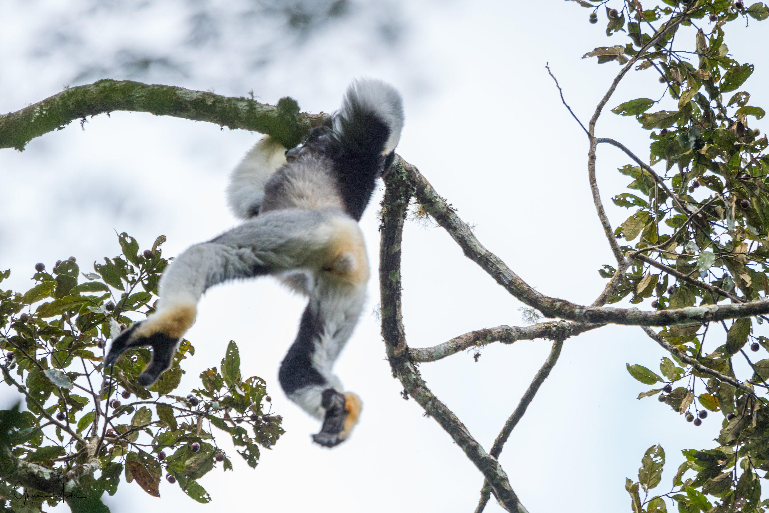 Madagascar--5374.jpg