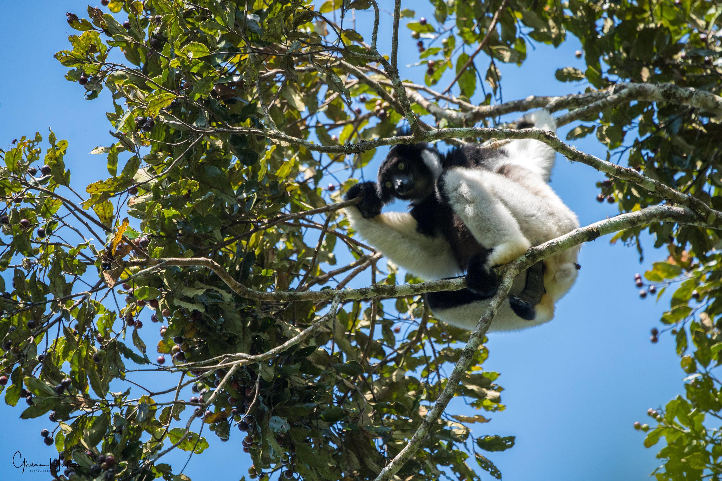 Madagascar--5158.jpg