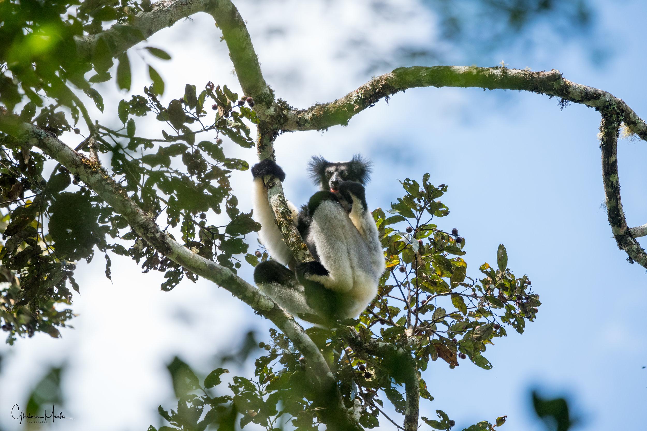 Madagascar--5405.jpg