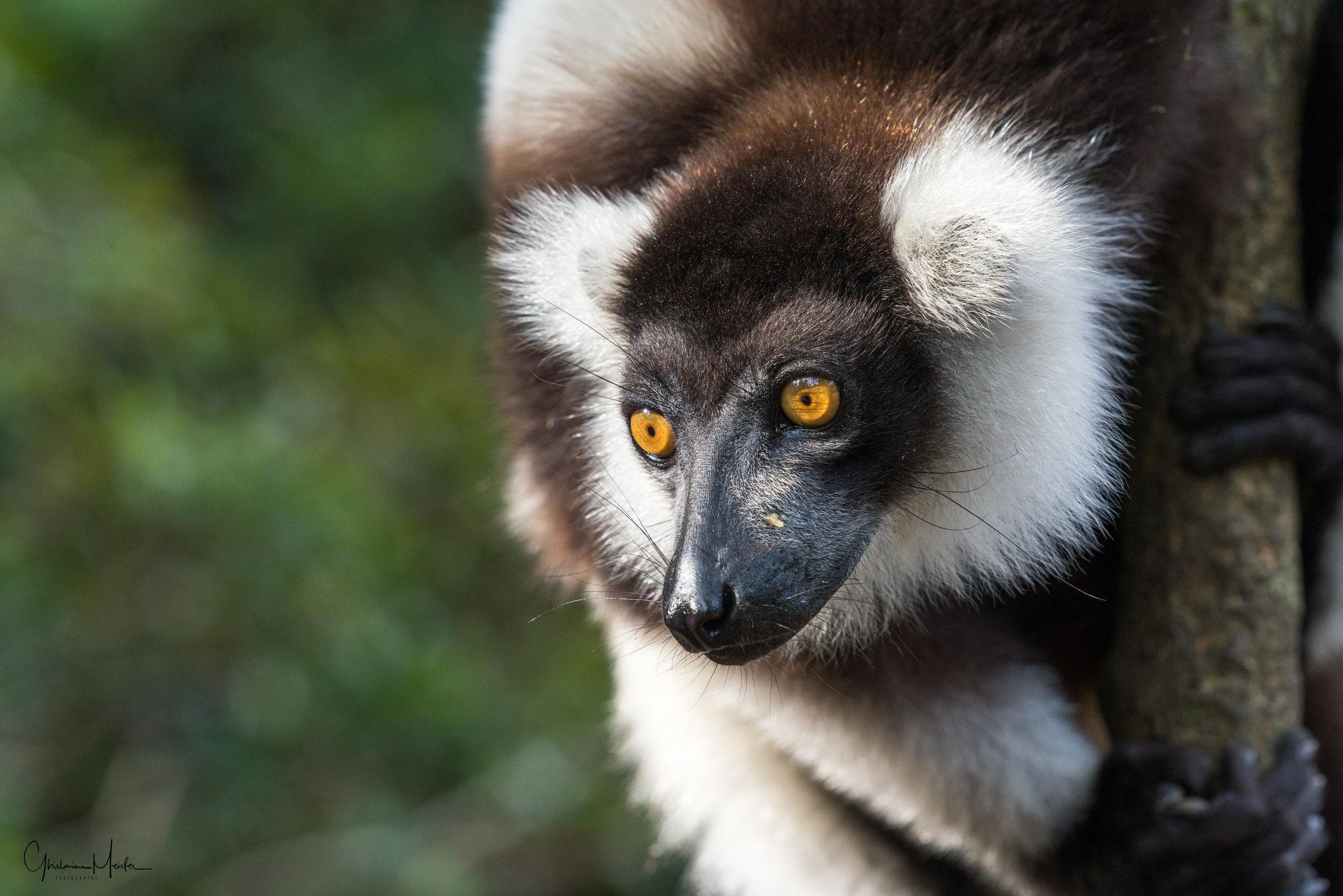 Madagascar--5542.jpg
