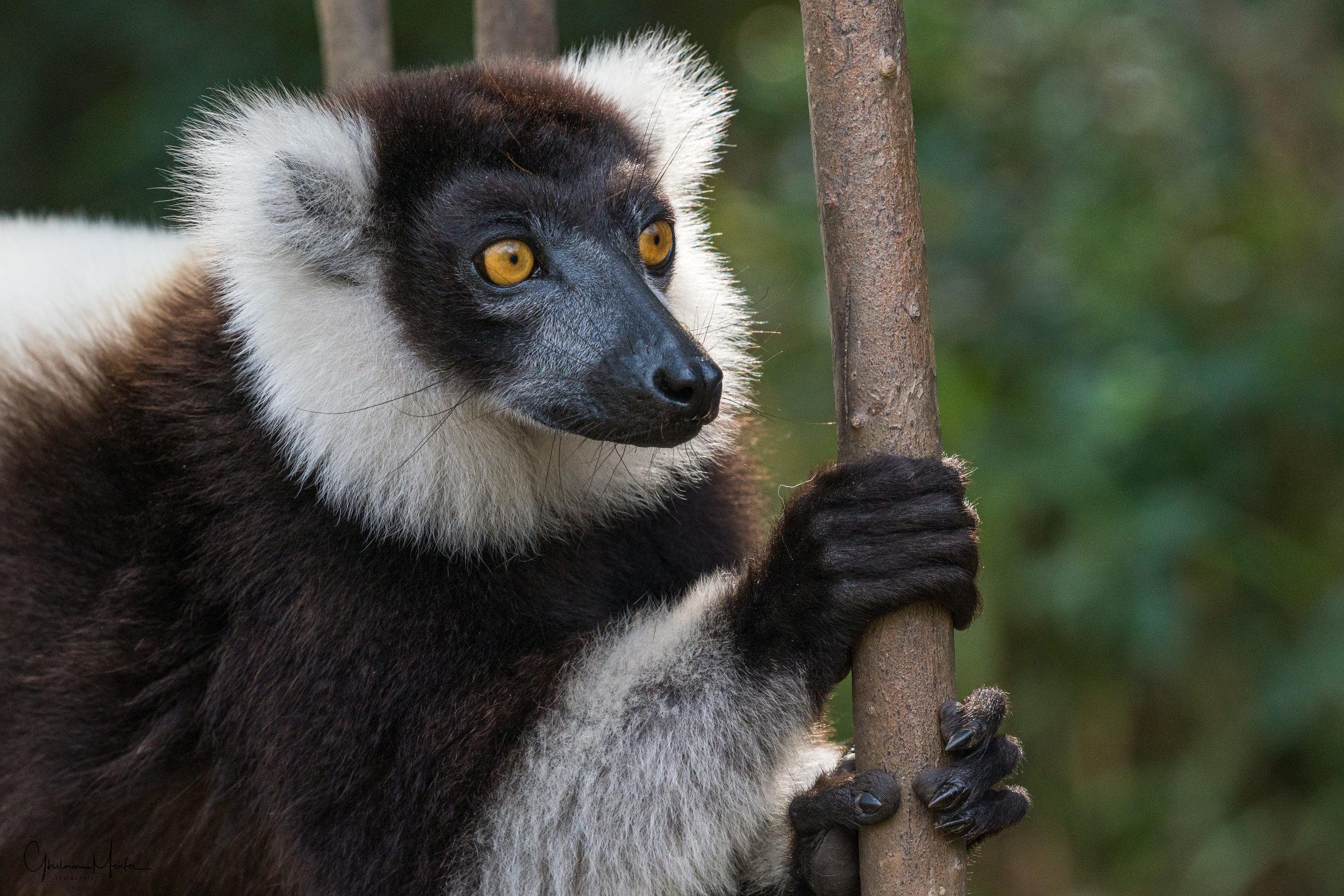 Madagascar--5552.jpg