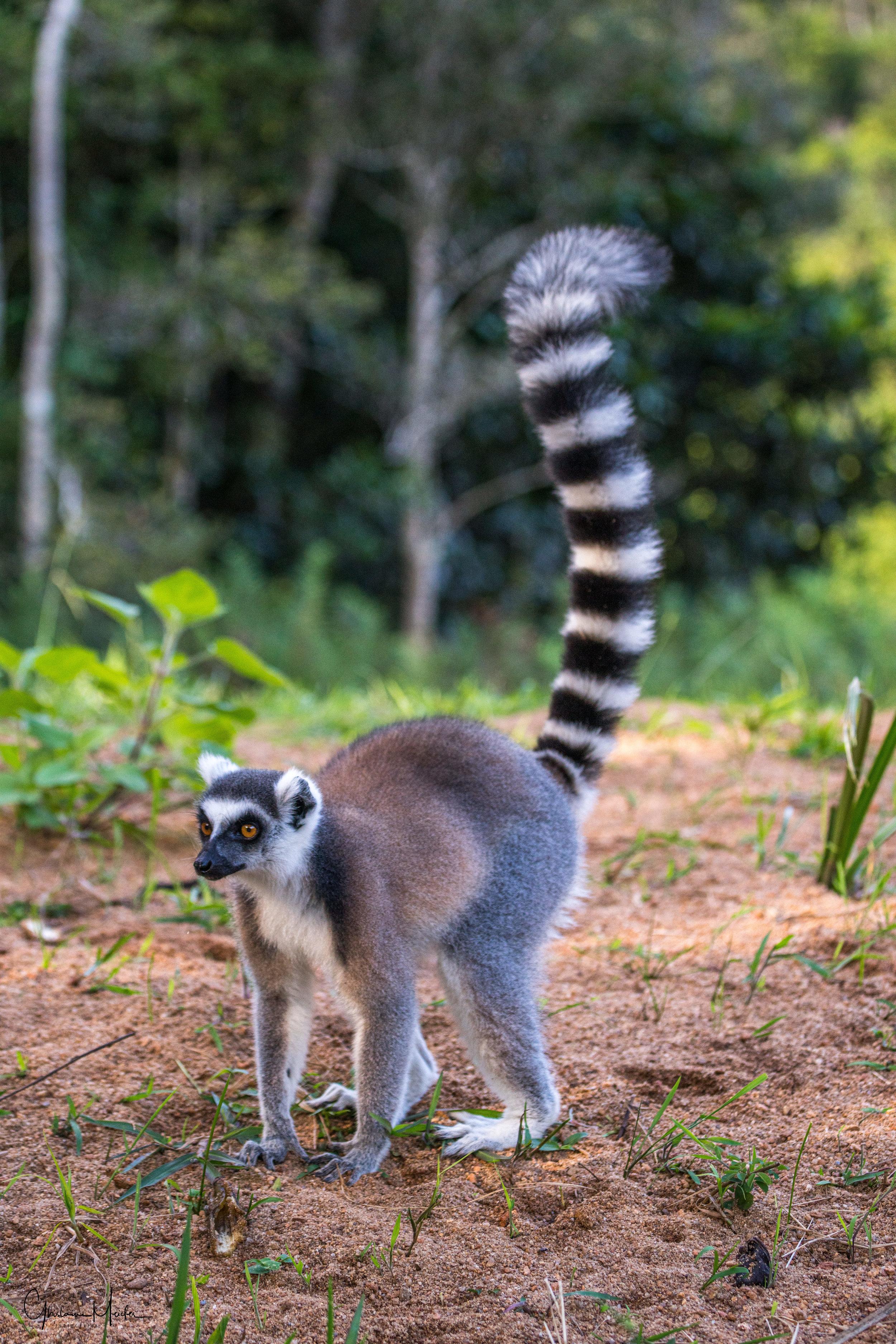 Madagascar--5848.jpg