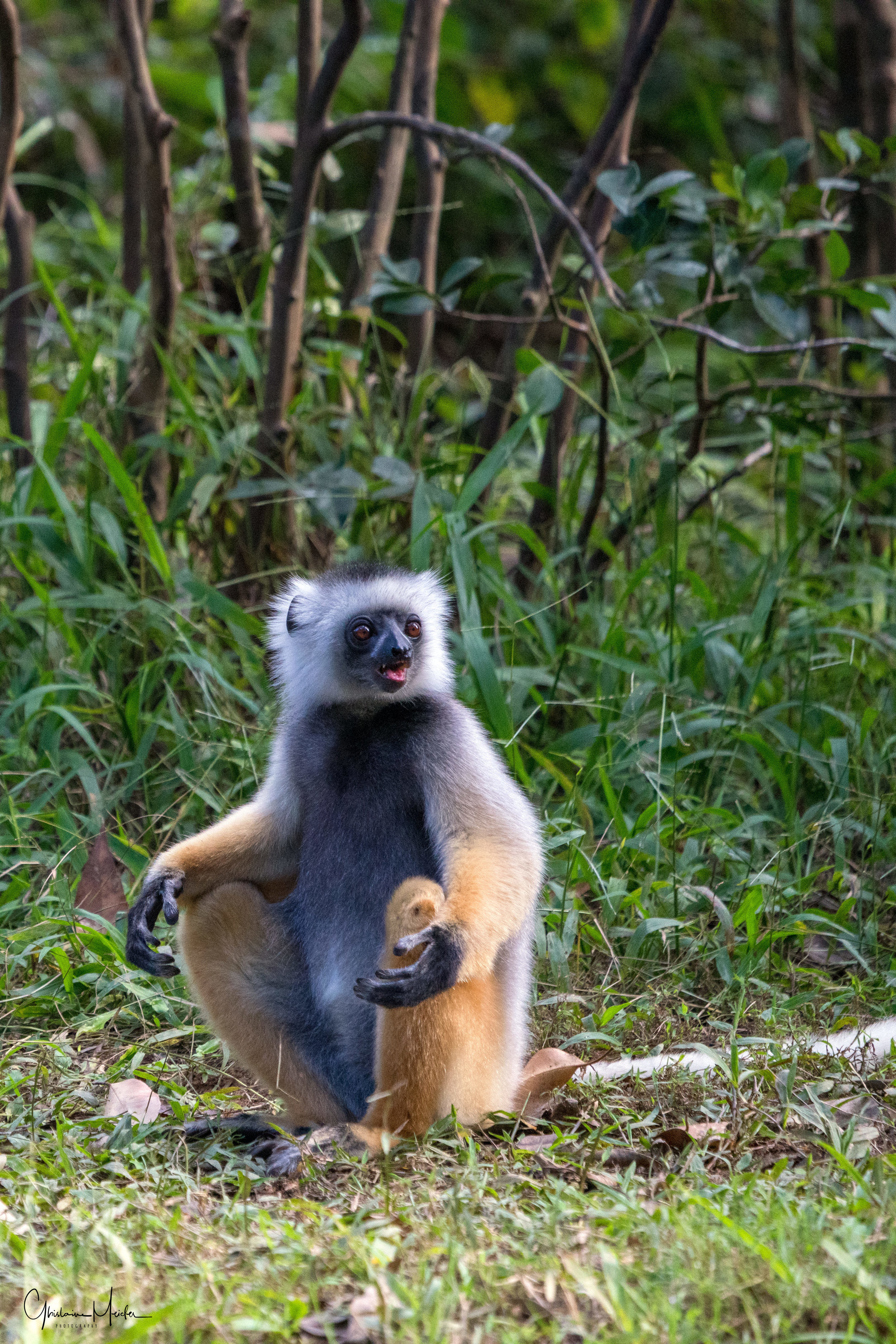 Madagascar--5662-Modifier.jpg
