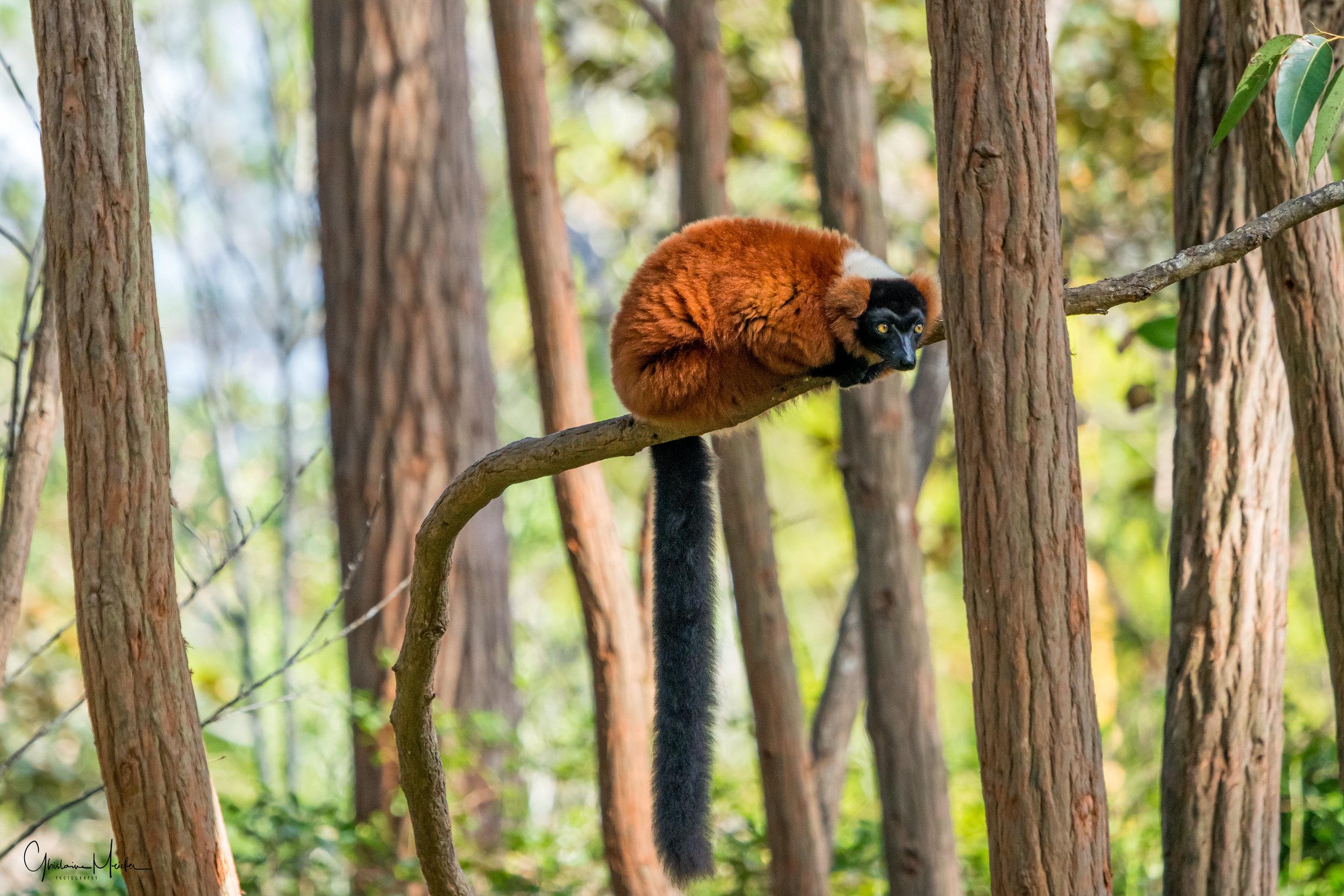 Madagascar--5645-Modifier.jpg