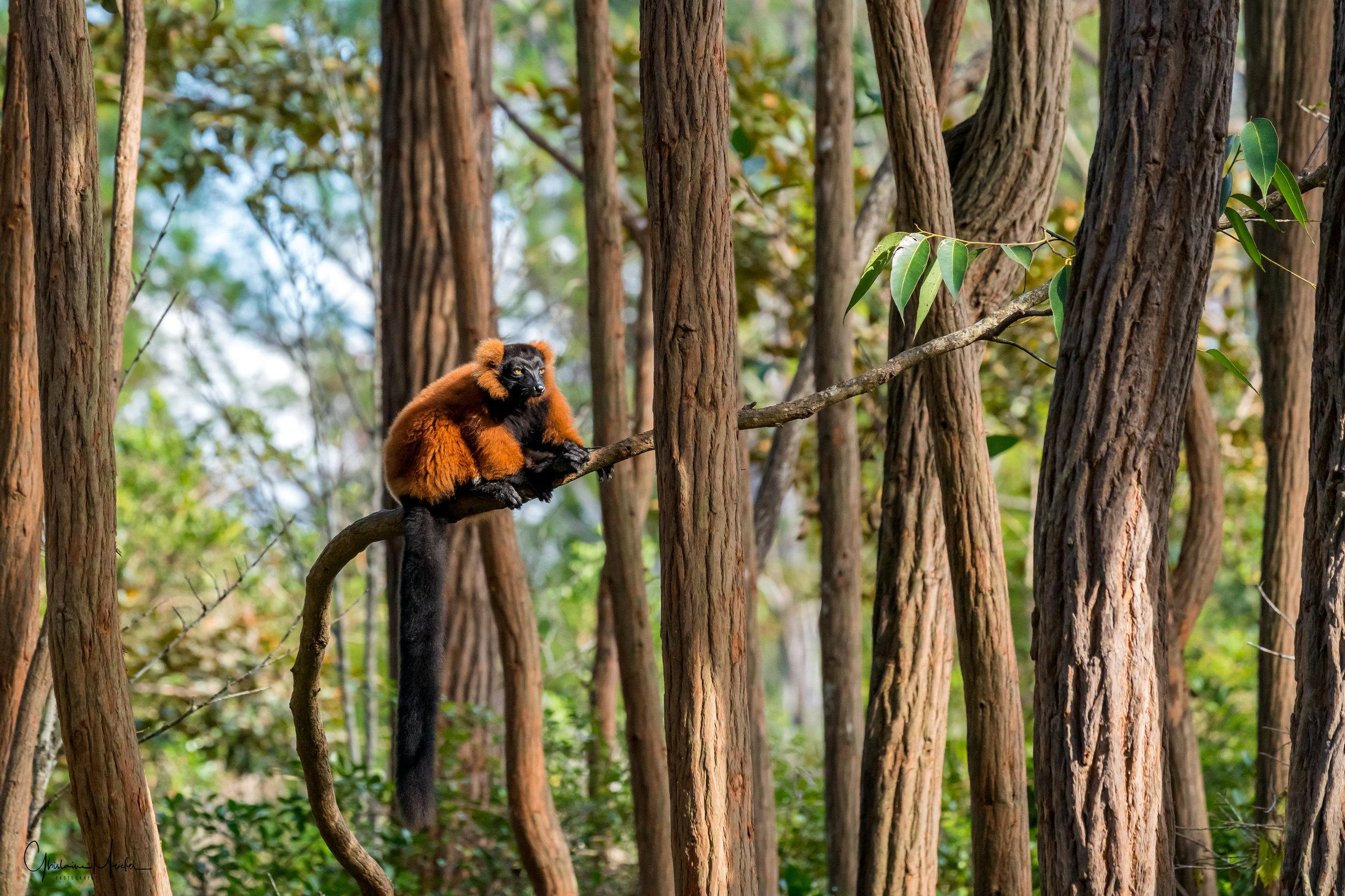 Madagascar--5616-Modifier.jpg