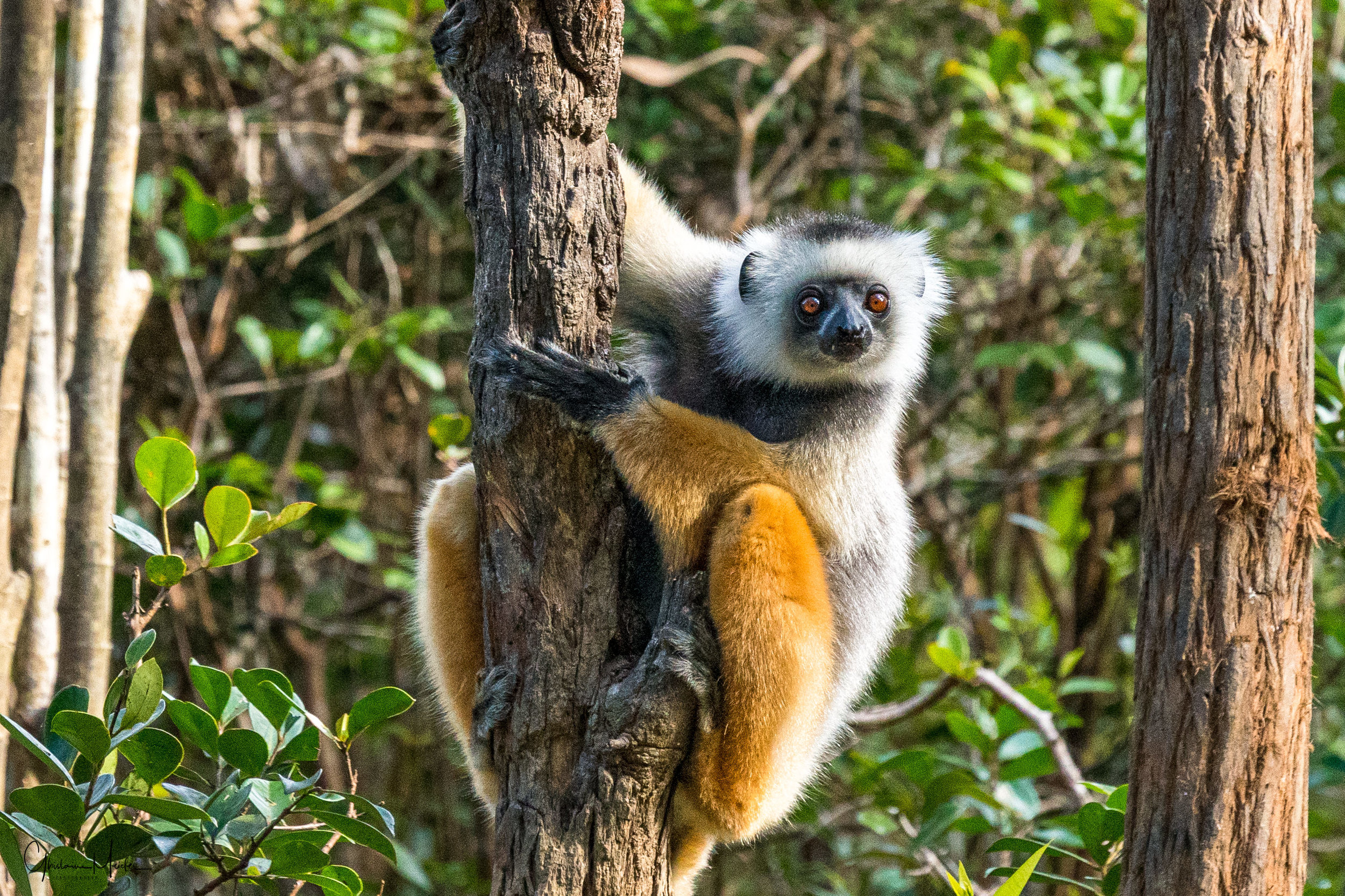 Madagascar--5629-Modifier.jpg