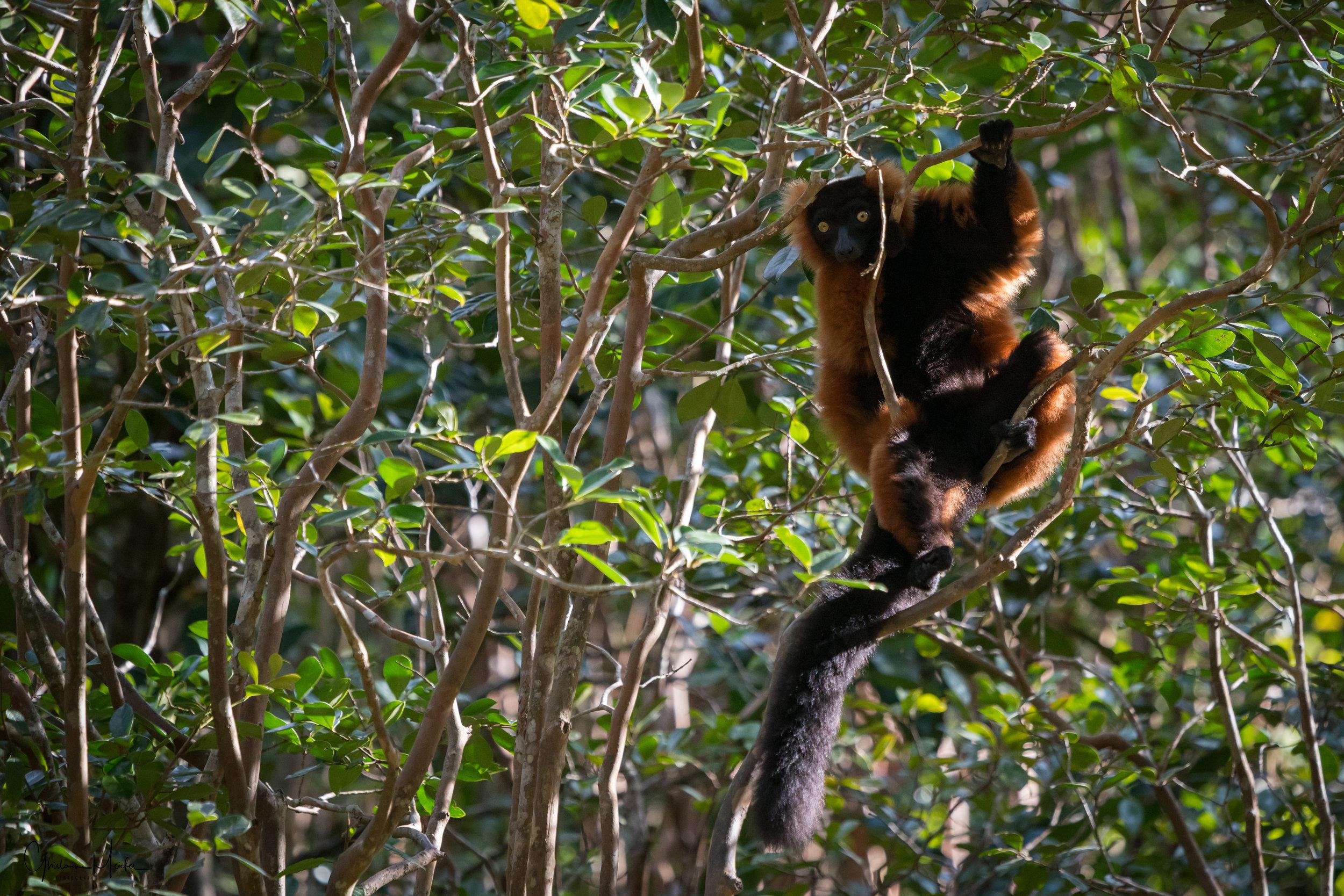 Madagascar--5712-Modifier.jpg