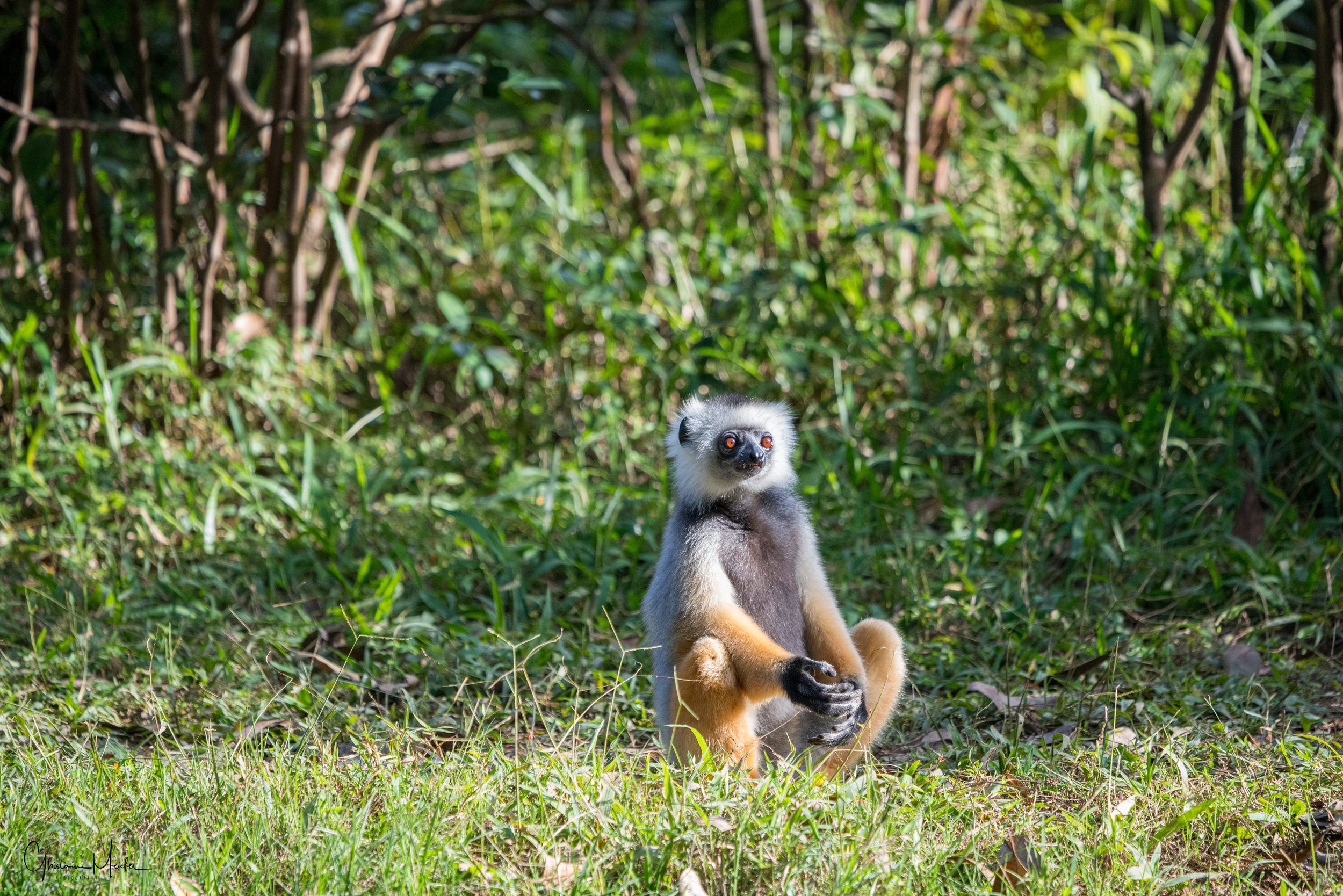 Madagascar--5640.jpg