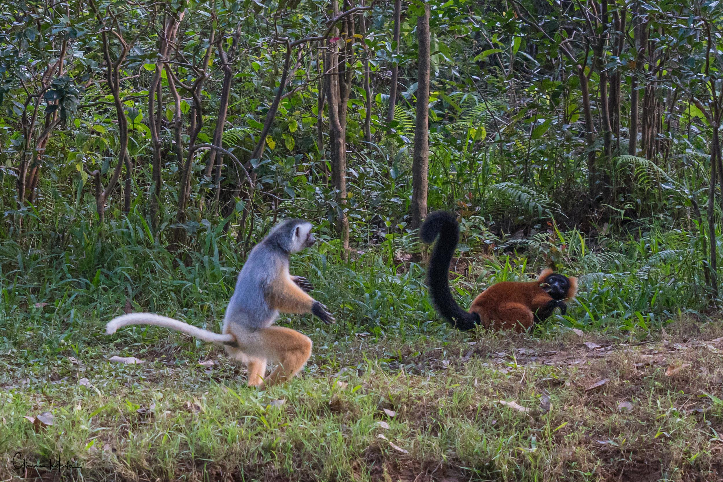 Madagascar--5591.jpg