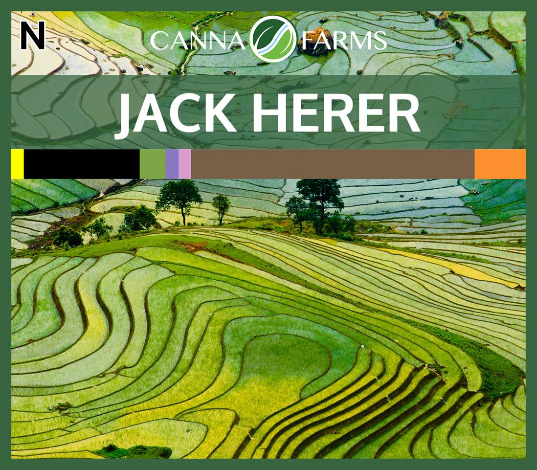 Jack_Herer_Blank.png