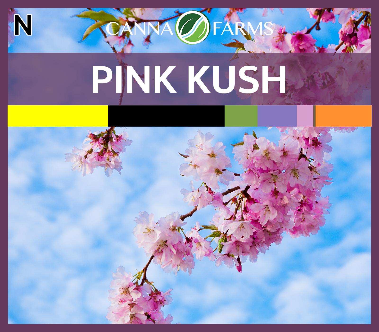 Pink_Kush_Blank.png