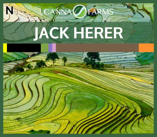 Jack Herer.png