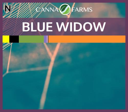 Blue Widow April 3.png