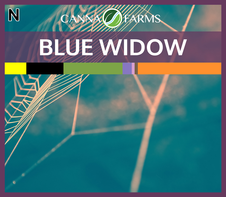 CF-BLUE-WIDOW.jpg