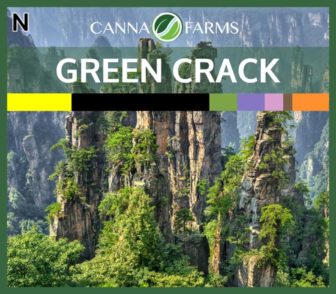 CF-GREEN-CRACK.jpg