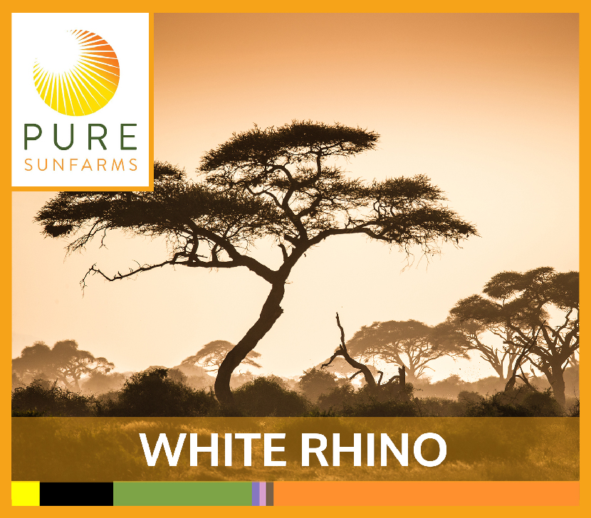 Sunfarms-WHITE-RHINO-TILE.jpg