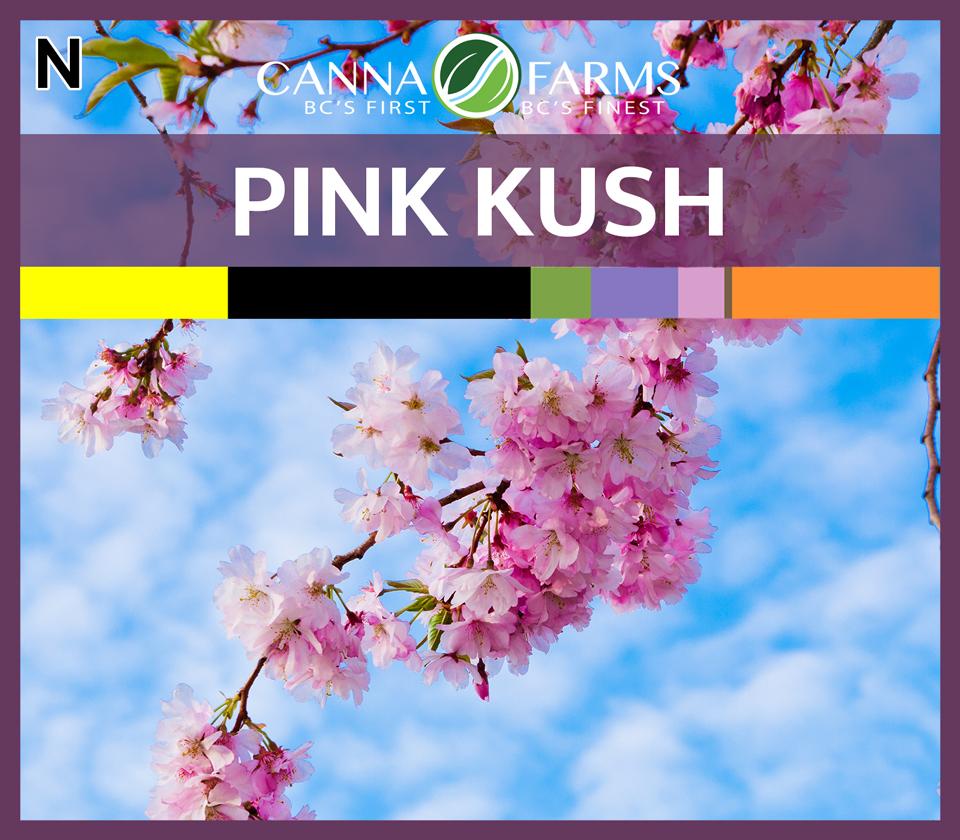 CF-PINK-KUSH.jpg