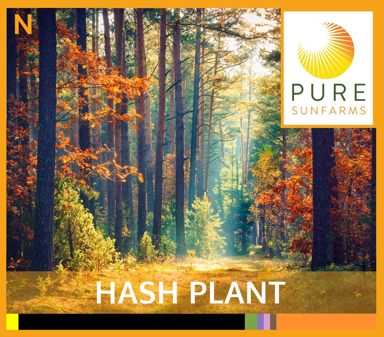 Sunfarms-HASH-PLANT-TILE.jpg