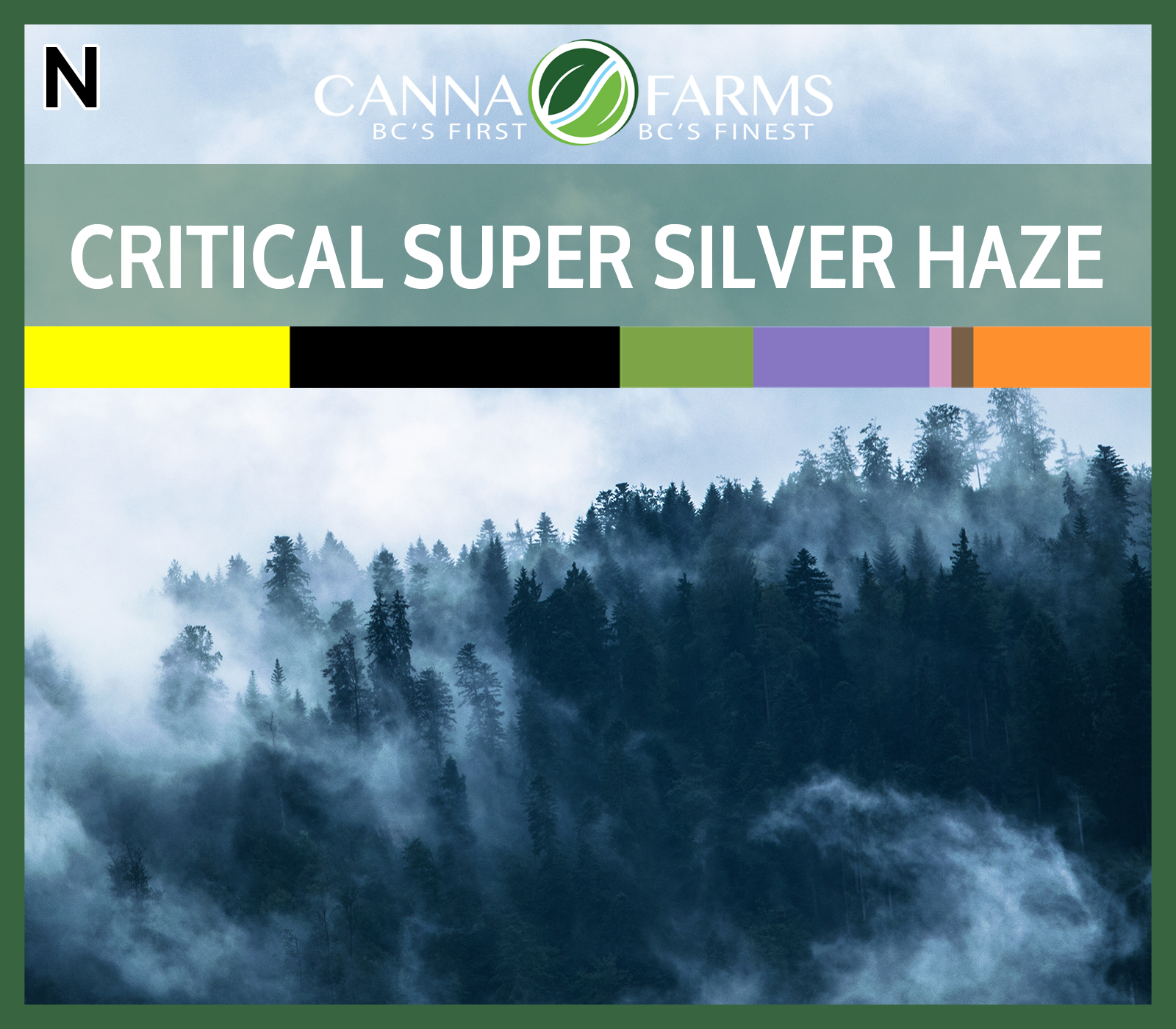 CF-CRITICAL SUPER SILVER HAZE.jpg