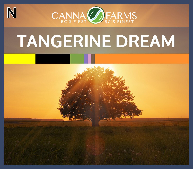 CF-TANGERINE DREAM.jpg