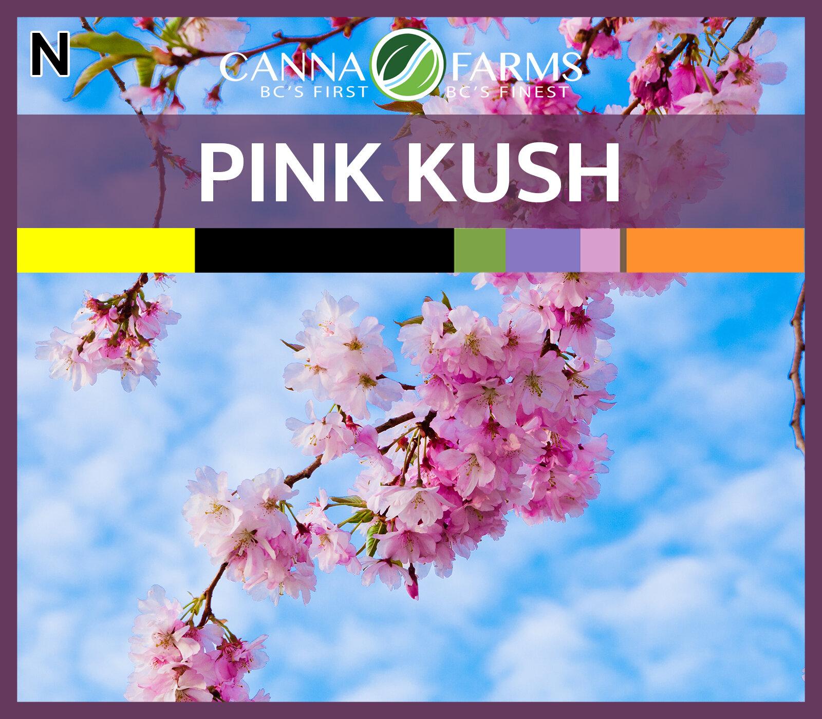 CF-PINK KUSH.jpg